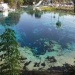 weeki-wachee-springs